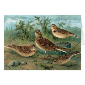 Antique Litho, Eurasian skylark, Short-toed Lark Card
