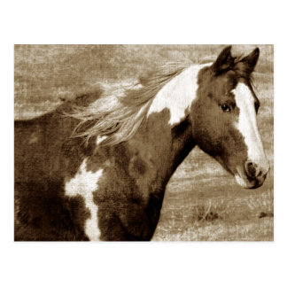 Antique Looking Paint Mare Postcard