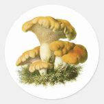 Antique Mushroom Print 13 Stickers