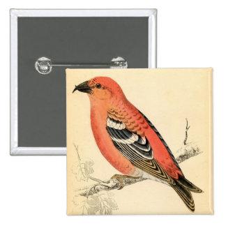 Antique Natural History Finch Pink Crossbill Bird Pinback Buttons