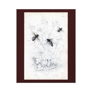 Antique Natural History Print Honey Bees