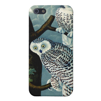 Antique Natural History Snowy Owl  Print Cases For iPhone 5