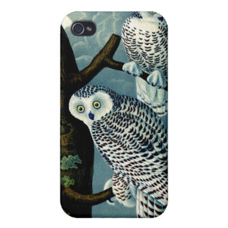 Antique Natural History Snowy Owl  Print iPhone 4/4S Covers