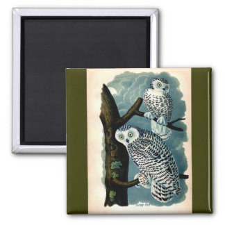 Antique Natural History Snowy Owl  Print 2 Inch Square Magnet