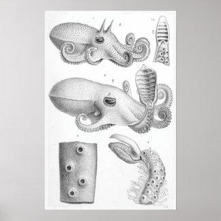 Antique Octopus Sketch Biology Poster Natural Hist