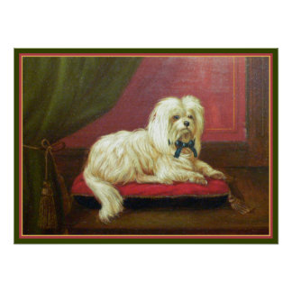 Antique Painting - Pampered Maltese on a Pillow Print