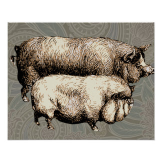 Antique Pigs Vintage piggy drawing Posters