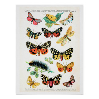 Antique plate, butterflies of Europe: plate 10 Poster