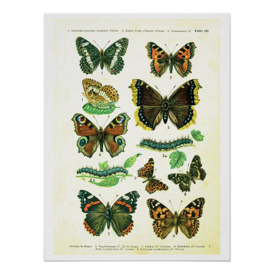 Antique plate, butterflies of Europe: plate 3 Poster