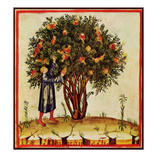 ANTIQUE POMEGRANATE TREE POSTER