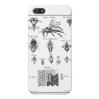 Antique Print Bees & Honeycomb Cover For iPhone SE/5/5s