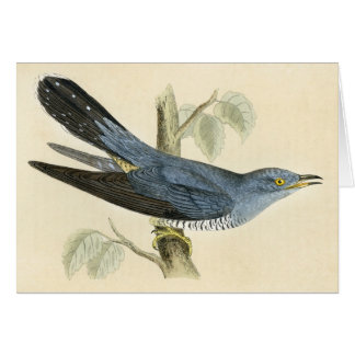 Antique Print of a Common Cuckoo Cards