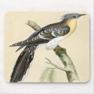 Antique Print of a Great Spotted Cuckoo Mousemats