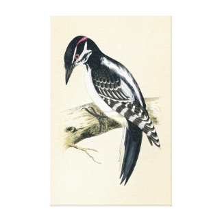 Antique Print of a Hairy Woodpecker
