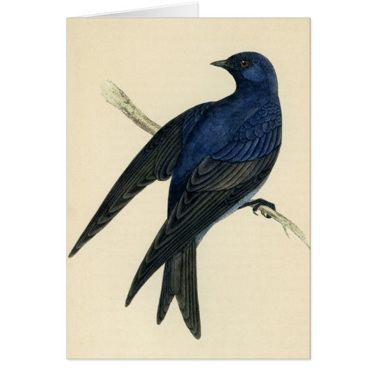 Antique Print of a Purple Martin Card