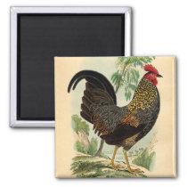 Antique Print Vintage Rooster Cockerel Magnet