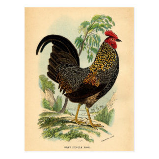 Antique Print Vintage Rooster Cockerel Postcard