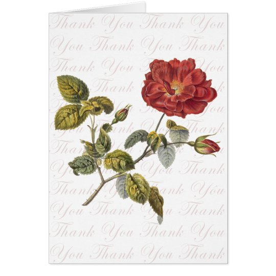 Antique Red Rose Engraving Thank You Card