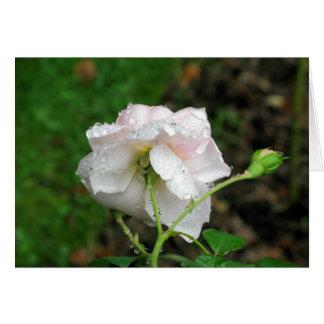 Antique Rose 2 Greeting Card
