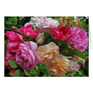 Antique Roses Thank You Stationery Note Card