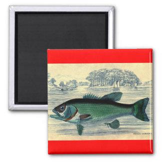 Antique Salmon Fish Fishing Print Magnet