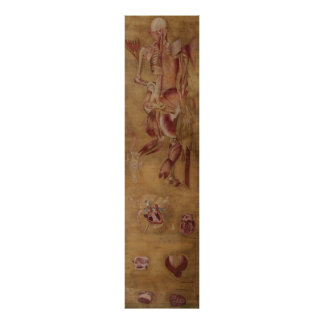 Antique silk painting myology muscles poster