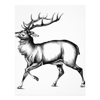 Antique stag art drawing handmade nature letterhead