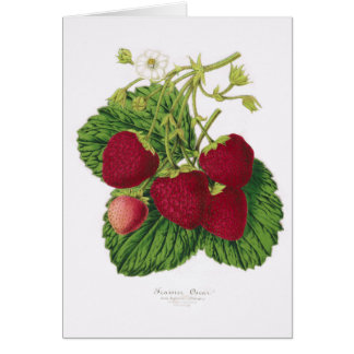 Antique Strawberry Print Greeting Card