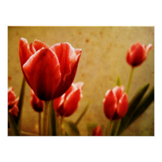 Antique Tulips Canvas Poster