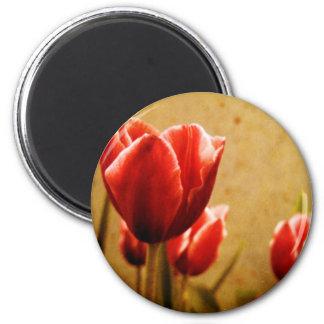 Antique Tulips Magnet