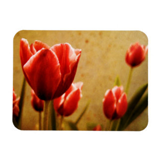 Antique Tulips Rectangular Photo Magnet