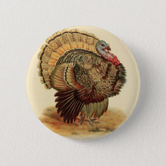 Antique Turkey illustration Thanksgiving Pinback Button