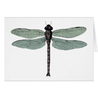 antique typographic vintage dragonfly card