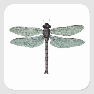 antique typographic vintage dragonfly square sticker