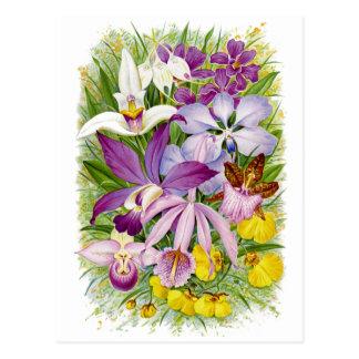 Antique/Vintage Orchids Floral Postcard