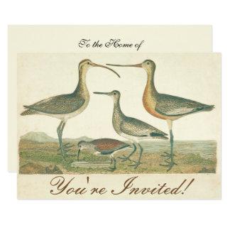 Antique Water Birds Marsh Illustration Card
