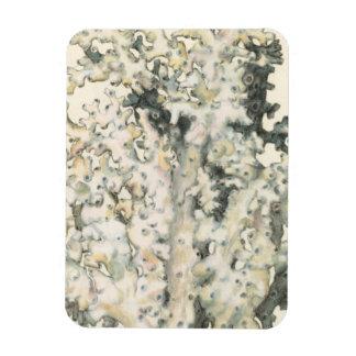 Antique Watercolor Coral Magnet