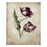 Antiqued  color botanical drawings posters