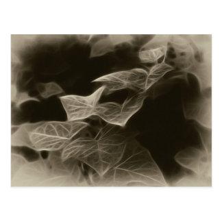 Antiqued Ivy 11 Postcard