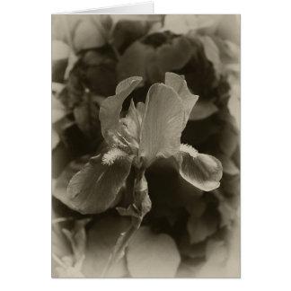Antiqued Purple Iris 1 Card