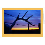 """Antlers #3"" Greeting Card"
