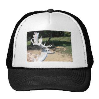 Antlers Mesh Hats