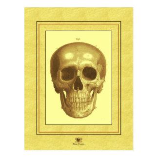 Antque Skull Postcard