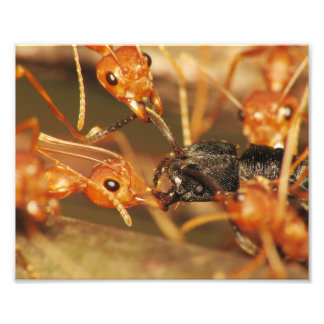 Ants-001b Fotografias
