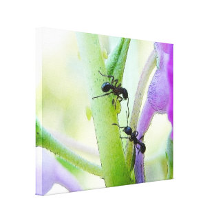 Ants In My Plants Stretched Canvas Prints