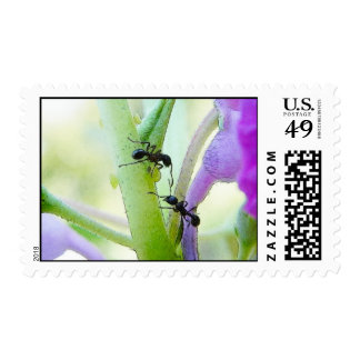 Ants In My Plants Postage
