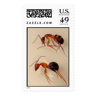 Ants Postage Stamps