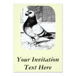 Antwerp Short Faced Pigeon Custom Invites