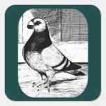 Antwerp Short Faced Pigeon Stickers