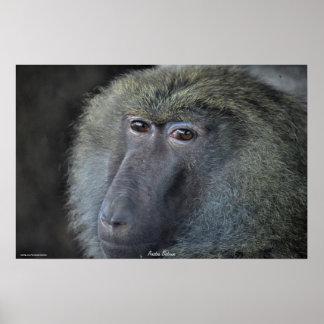 Anubis Baboon African Monkey Wildlife Photo Poster